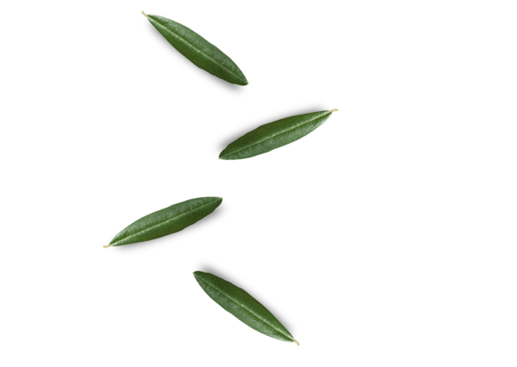king_of_olives_leafs_03