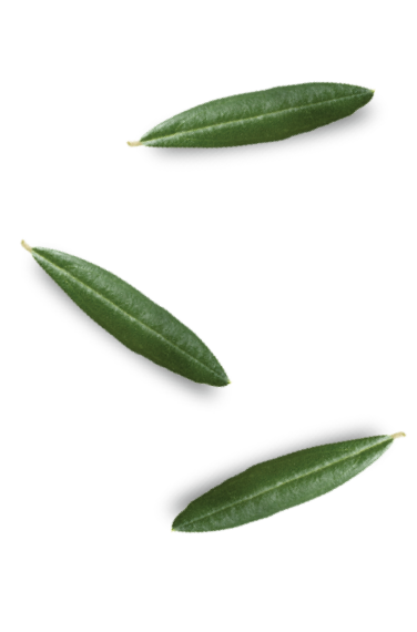 king-of-olives-tree-leafs